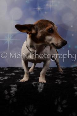 M&N Photography -DSC_7111