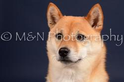 M&N Photography -DSC_0370