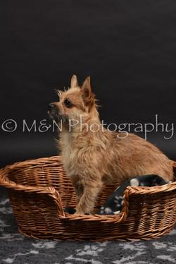 M&N Photography -DSC_2534