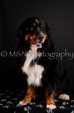 M&N Photography -DSC_5709