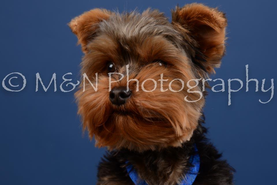 M&N Photography -DSC_5227