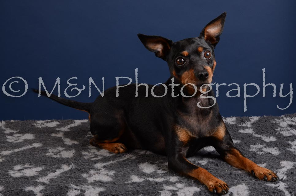 M&N Photography -DSC_3870