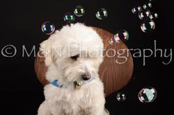M&N Photography -DSC_9800