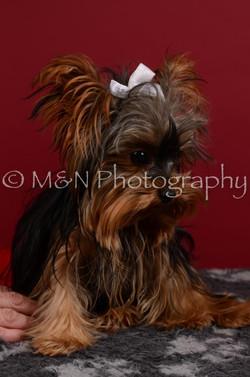 M&N Photography -DSC_3334