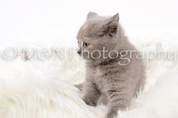 M&N Photography -DSC_8835