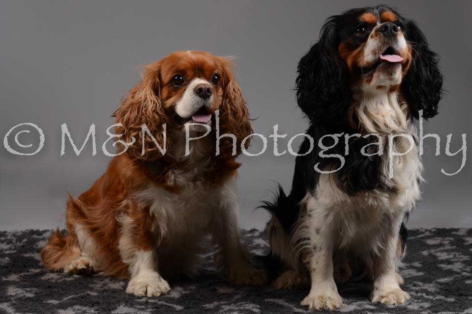 M&N Photography -DSC_1906