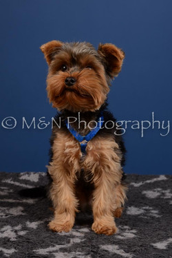 M&N Photography -DSC_5228