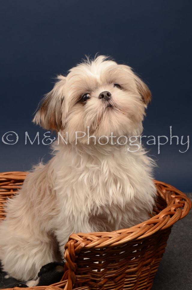 M&N Photography -DSC_4728