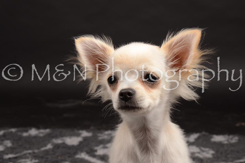 M&N Photography -DSC_0138