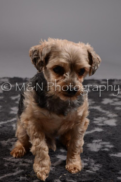 M&N Photography -DSC_1795