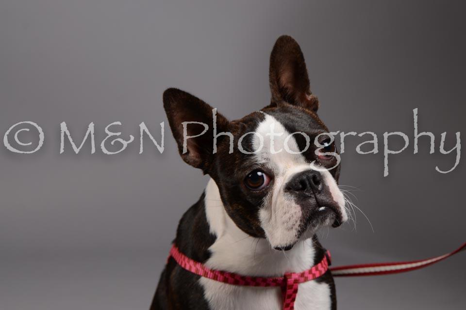 M&N Photography -DSC_2400