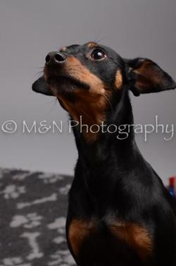 M&N Photography -DSC_2814