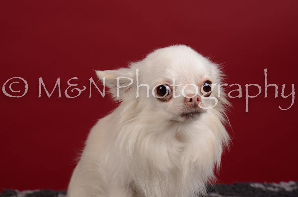 M&N Photography -DSC_3261