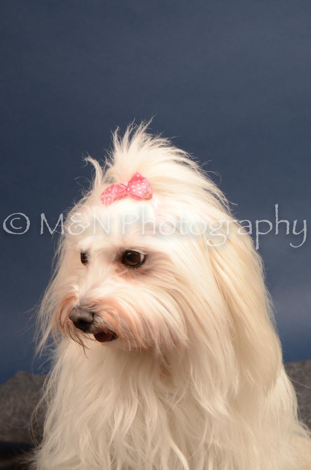 M&N Photography -DSC_4132