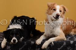 M&N Photography -DSC_4495-2