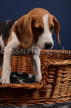 M&N Photography -DSC_4164