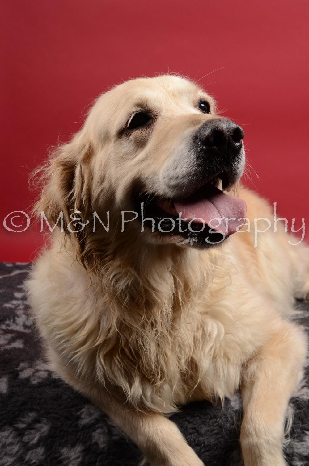 M&N Photography -DSC_8426