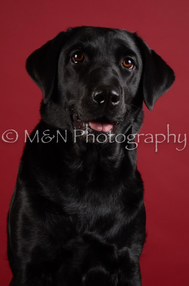 M&N Photography -DSC_3156