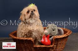 M&N Photography -DSC_4488-2