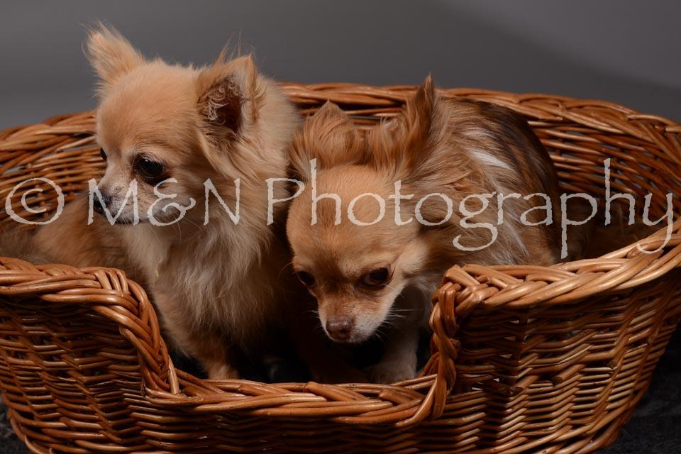 M&N Photography -DSC_1829