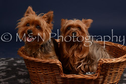 M&N Photography -DSC_0431