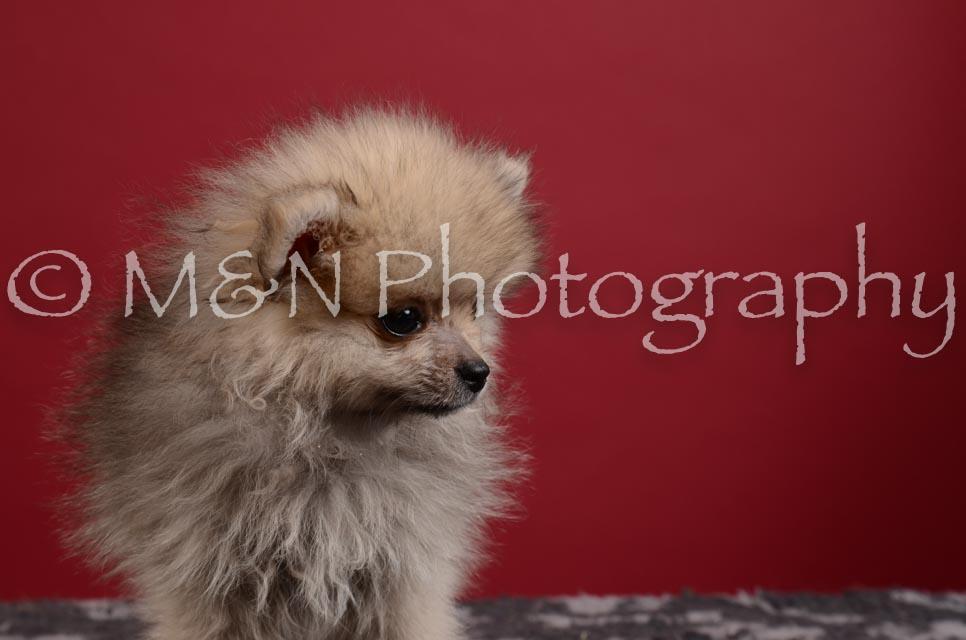 M&N Photography -DSC_3410