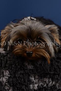 M&N Photography -DSC_5198