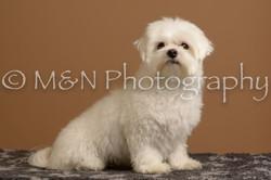 M&N Photography -_SNB0658