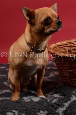 M&N Photography -DSC_8666