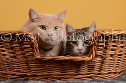 M&N Photography -DSC_4810