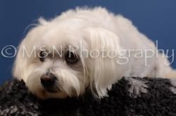 M&N Photography -DSC_5206