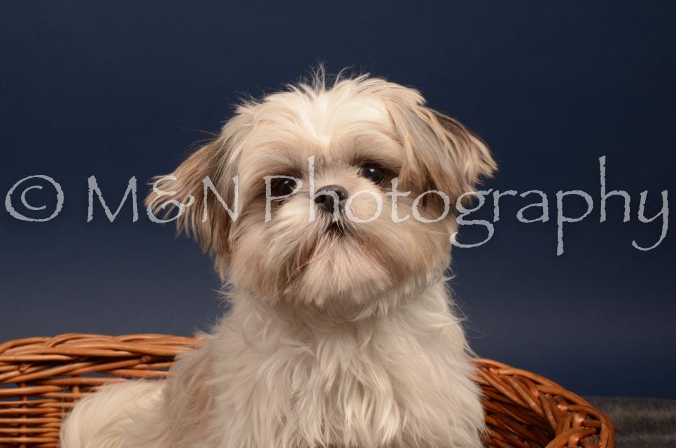 M&N Photography -DSC_4727