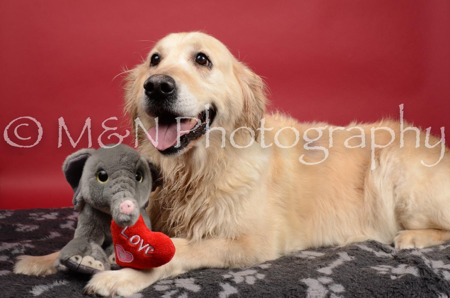 M&N Photography -DSC_8445