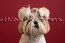 M&N Photography -DSC_3094