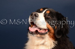 M&N Photography -DSC_3804