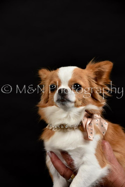 M&N Photography -DSC_2749