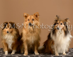 M&N Photography -_SNB0690-3