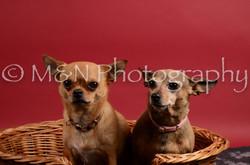 M&N Photography -DSC_8672