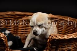 M&N Photography -DSC_2517