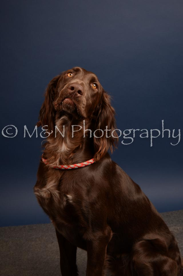 M&N Photography -DSC_4526