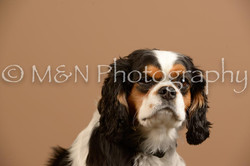 M&N Photography -_SNB0938