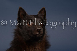 M&N Photography -DSC_3915
