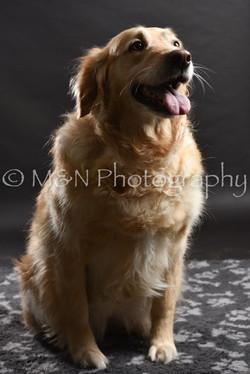 M&N Photography -DSC_2438