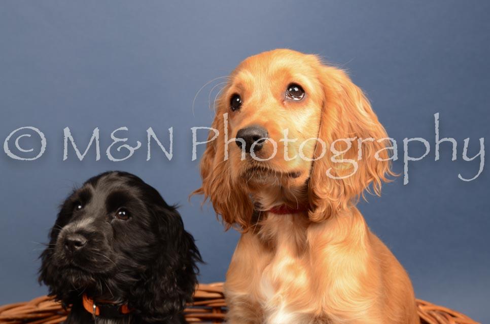 M&N Photography -DSC_4293