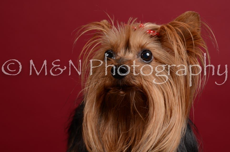 M&N Photography -DSC_3620