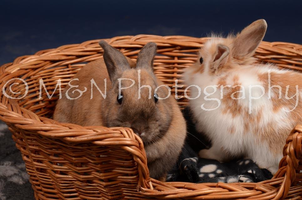 M&N Photography -DSC_0773