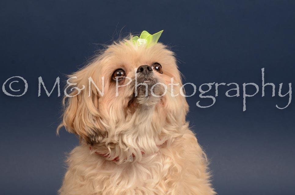 M&N Photography -DSC_4479