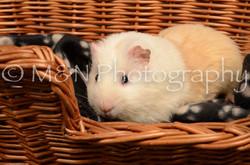 M&N Photography -DSC_4680