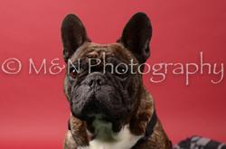 M&N Photography -DSC_6636