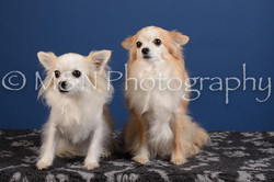 M&N Photography -DSC_5053